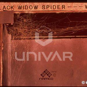 Black Widow Spider Web