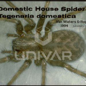 Funnel Web Spider Close-up