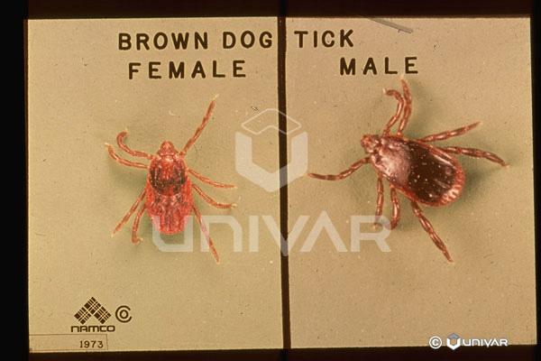 Myiasis Maggot Infestation Pets and Maggots Dog Maggots