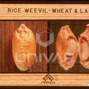 Rice Weevil Larva in Wheat