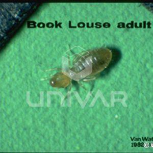 Book Louse