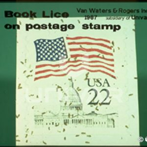 Book Lice on Postage Stamp
